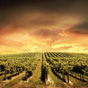 Early Wines in the Americas